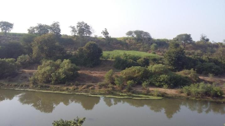 Krishna river banks
