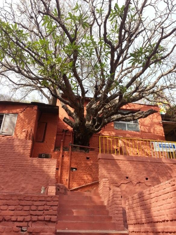 Renovation preserving nature