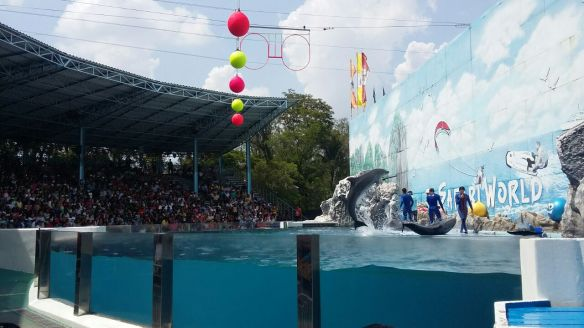 Marine Park_Dolphin show