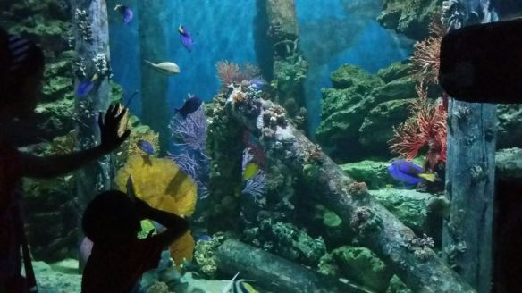 Variety of marine life